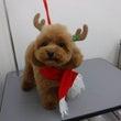 クリスマスに向けて☆