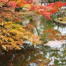奈良公園の紅葉(20…