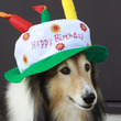 アンの誕生日