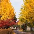 秋色探し。