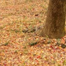 落ち葉のコンチェルト…