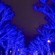 青の洞窟  SHIB…