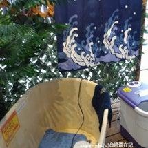台湾冬の風物詩