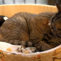 寄り添って寝る猫たち…