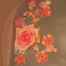 バラ風呂で気分爽快 …