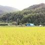 無農薬栽培玄米販売の…