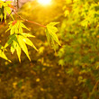 秋の写真部