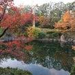紅葉の目白庭園☆