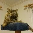 トランスフォーマー猫…