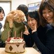カトリ犬の誕生日パー…