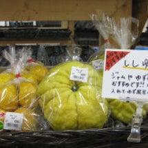 大きい柚子ですよ!