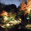 昭和記念公園のイルミ…