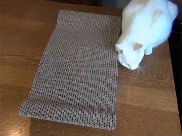 爪研ぎにスリスリする白猫ユキ
