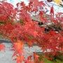 京都の紅葉と姫路城