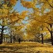 秋を訪ねて一千里