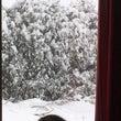 大雪警報って(ー ー…