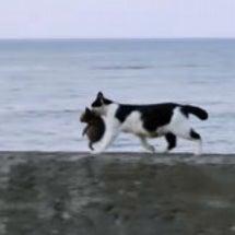 癒される猫の親子の動…
