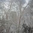 昨日・今日と雪です!…