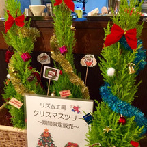 生クリスマスツリー限…
