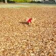 落ち葉だらけ。風びゅ…