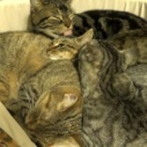 寒いから猫団子