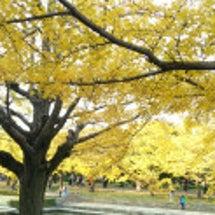 昭和記念公園しっぽフ…