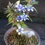 11月の庭に咲いた花…