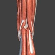 膝の裏のコリ