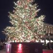 クリスマスツリーpa…