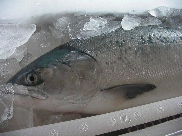 白鮭2812
