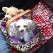 ペットとレンタカー