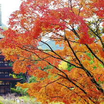 秋の瑠璃光寺
