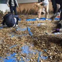 大豆の脱穀作業です