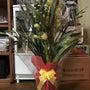 きれいな鉢植えの花を…