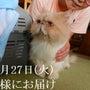 多摩猫 フーちゃんの…
