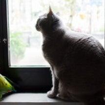 猫と一緒にカラス観賞