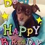 バディの誕生日