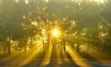 冬の朝日の日差し