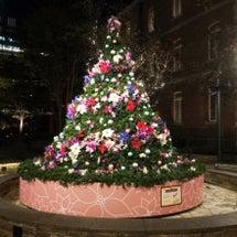 クリスマスツリーみて…