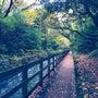 伊豆高原の大自然を視…