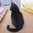 巷で話題の黒猫のウワ…