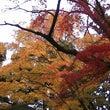 新宿御苑で紅葉を