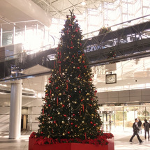 とあるクリスマスツリ…