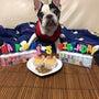 愛犬ハーツのお誕生日
