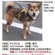 迷子犬→無事捕獲でき…