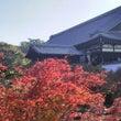 東福寺の紅葉と庭園巡…