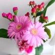 今日のサロンの花はピ…