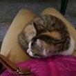 成都、猫パラダイス