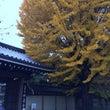 お寺でお能と落語の会