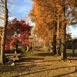 花立山の城山公園の紅…